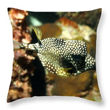 Throw Pillow featuring the photograph Smooth Trunkfish by Amy McDaniel