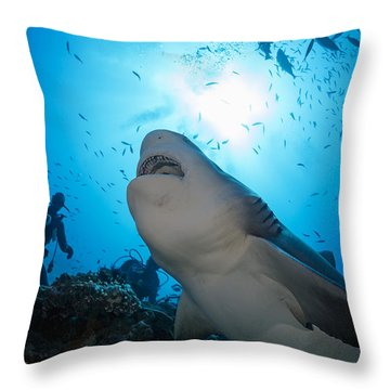 Snacking Bull Shark Throw Pillow by Dave Fleetham