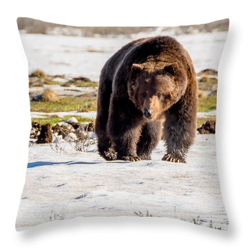 Throw Pillow featuring the photograph Snaggletooth Roams Yellowstone by Yeates Photography
