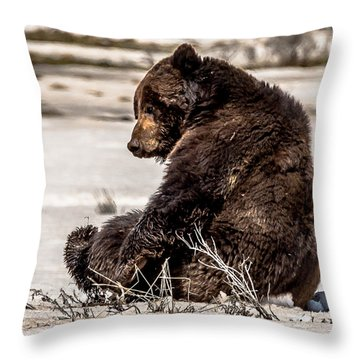 Throw Pillow featuring the photograph Snaggletooth Takes A Rest by Yeates Photography