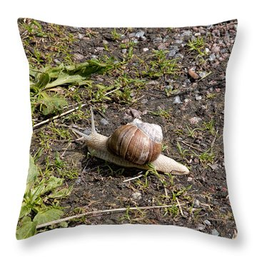 Throw Pillow featuring the photograph Snail by Leif Sohlman