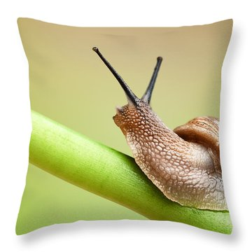 Snail On Green Stem Throw Pillow by Johan Swanepoel