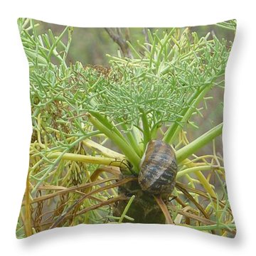Snail Trail Throw Pillow by Nora Boghossian