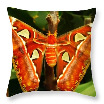 Throw Pillow featuring the photograph Snake Head by Clare Bevan