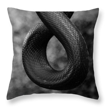 Snake Springs Eternal Throw Pillow by Rebecca Sherman