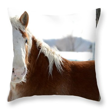 Throw Pillow featuring the photograph Sneak Peek by Linda Mishler