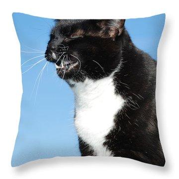 Sneezing Cat Throw Pillow