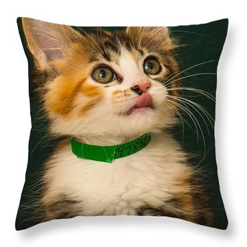 Snickerdoodle  Throw Pillow