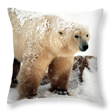 Snow Bear Throw Pillow