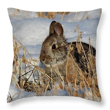 Snow Bunny Throw Pillow
