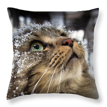 Snow Cat Throw Pillow by Shane Holsclaw