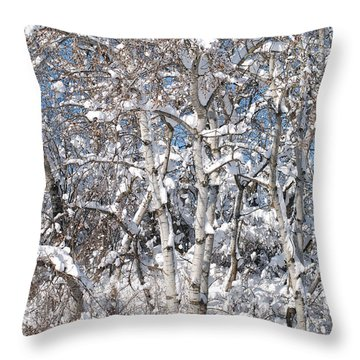 Snow Covered Birch Trees Throw Pillow by Janice Adomeit