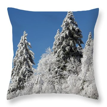 Snow Covered Red Spruce Throw Pillow