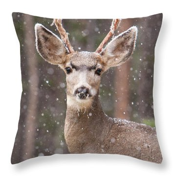 Snow Deer 1 Throw Pillow
