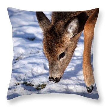 Snow Digging Throw Pillow by Karol Livote