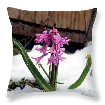 Snow Flower Throw Pillow by Fiona Kennard