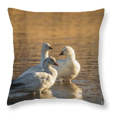Throw Pillow featuring the photograph Snow Geese 3 by Mitch Shindelbower