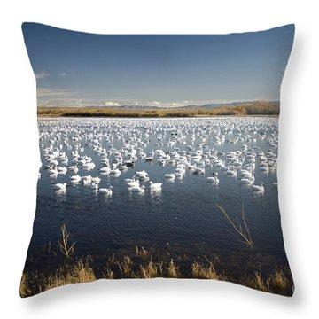 Snow Geese - Bosque Del Apache Throw Pillow