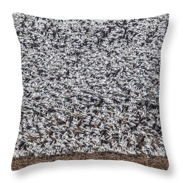 Snow Geese Throw Pillow by Brian Williamson