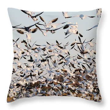 Snow Geese Takeoff From Farmers Corn Field. Throw Pillow