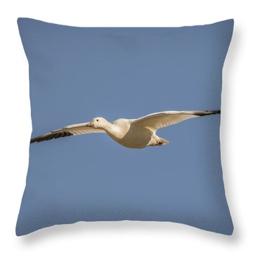 Throw Pillow featuring the photograph Snow Goose In Flight 2 by Mitch Shindelbower