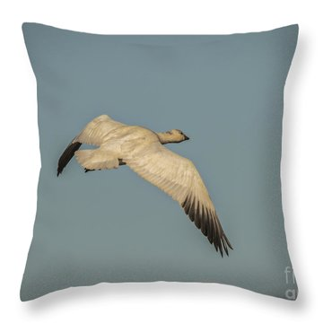 Throw Pillow featuring the photograph Snow Goose In Flight by Mitch Shindelbower