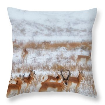 Snow Grazers Throw Pillow