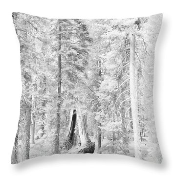 Snow Impressions Throw Pillow by Angela Stanton