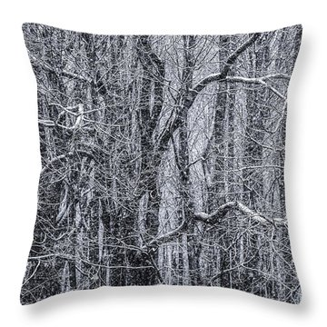 Snow In The Forest Throw Pillow by Diane Diederich