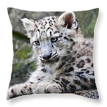 Snow Leopard Cub Throw Pillow