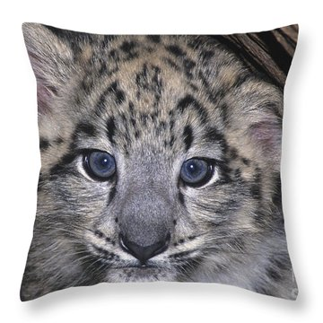 Snow Leopard Cub Endangered Throw Pillow