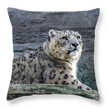 Throw Pillow featuring the photograph Snow Leopard by Phil Banks