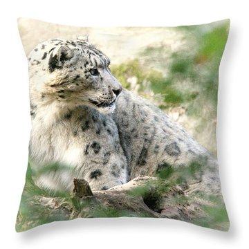 Snow Leopard Pose Throw Pillow by Karol Livote