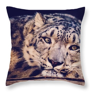 Snow Leopard Throw Pillow by Sara Frank
