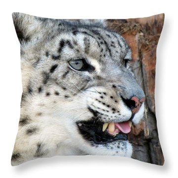 Snow Leopard Snarl Throw Pillow by Ramona Johnston