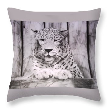 Throw Pillow featuring the photograph White Snow Leopard Chillin by Belinda Lee