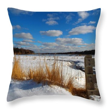 Snow Marsh Throw Pillow by Dianne Cowen