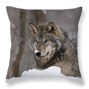 Snow Nose Throw Pillow