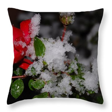 Throw Pillow featuring the photograph Snow Rose by Mim White
