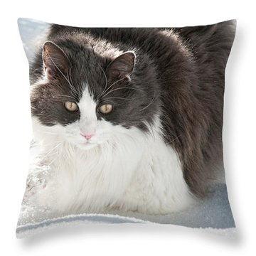 Throw Pillow featuring the photograph Snow Sticks To Your Paws by Lara Ellis