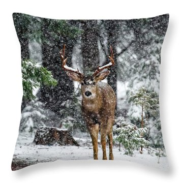 Bucks Throw Pillows