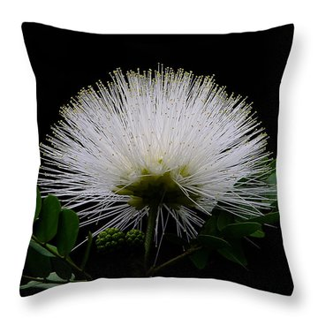Throw Pillow featuring the photograph Snowball by Blair Wainman