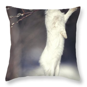 Snowshoe Hare Feeding On Pussy Willow Throw Pillow