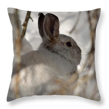 Snowshoe Hare Throw Pillow