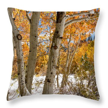 Snowy Aspen Grove Throw Pillow