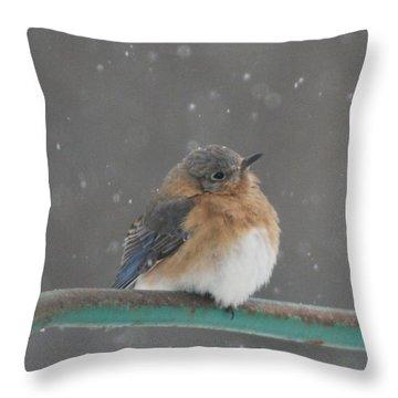 Snowy Bluebird Throw Pillow