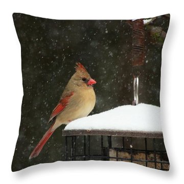 Snowy Cardinal Throw Pillow by Benanne Stiens
