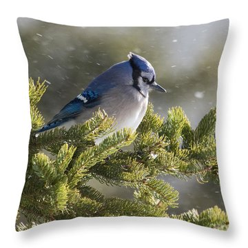 Snowy Day Blue Jay Throw Pillow