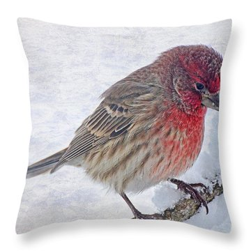 Snowy Day Housefinch Throw Pillow by Debbie Portwood