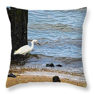 Snowy Egret At The Shore Throw Pillow